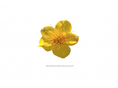 Wildflowering L.A. Book Product Thumb